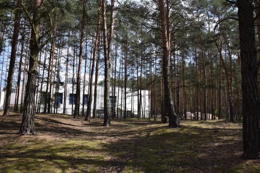Ta część lasu przy budowanym bloku operacyjnym zostanie.