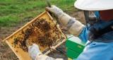 Opryski pomagają, ale też szkodzą. Szczególnie zagrażają pszczołom