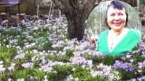 Bajeczne krokusy pani Izabelli. Zobaczcie jej niezwykły ogród w Zielonej Górze. Tak magicznie i kolorowo jest tu każdej wiosny