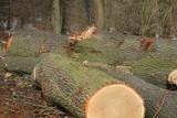 Wyciął drzewa z lasu w Sipiorach i zabrał do domu na opał. Już usłyszał zarzut kradzieży