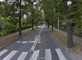 W Obornikach Śląskich wytną prawie 120 drzew! Przez przebudowę drogi zniknie piękna aleja