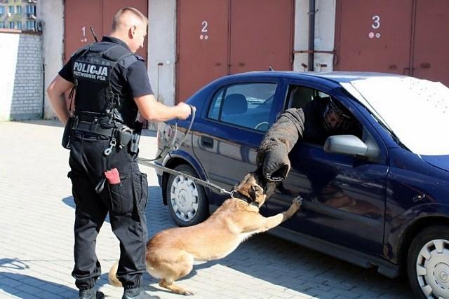 Policyjne psy systematycznie uczestniczą w szkoleniach przygotowujących ich do pracy w służbie