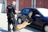 Jak szkoli się policyjne psy? Prezentują funkcjonariusze z Bielska Podlaskiego [ZDJĘCIA, WIDEO]