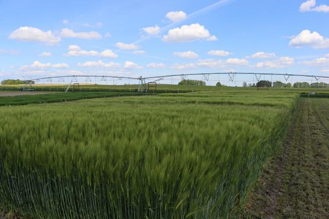 Minikowo. Piękne łany zbóż i nowoczesne systemy nadawniające