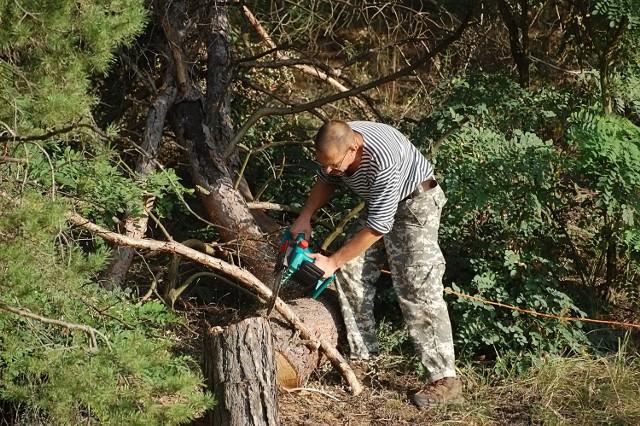 Zmieniły się przepisy dotyczące wycinki drzew