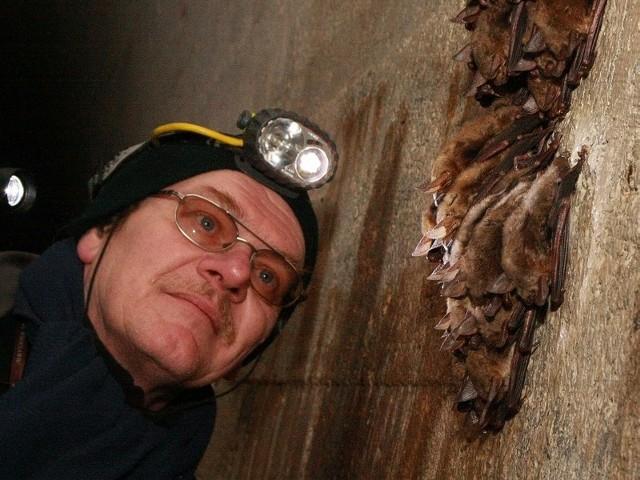 Dr Tomasz Kokurewicz przy koloni nocków dużych zimujących w jednej z komór tzw. Pętli Boryszyńskiej koło wsi Boryszyn.