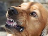 Co zrobić gdy zaatakuje nas pies? Zobacz, jak zareagować! [zdjęcia]