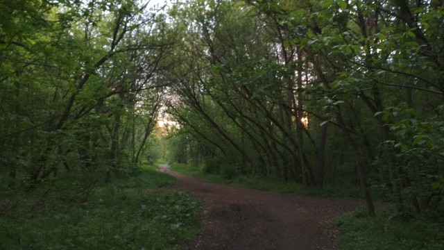 Droga publiczna czy leśna? (Prawidłowa odpowiedź: publiczna).