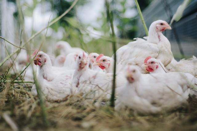 Po zakończeniu procesu konsultacji, przed wysłaniem Planu Strategicznego dla Wspólnej Polityki Rolnej do Brukseli prezydencka Rada ds. Rolnictwa i Obszarów Wiejskich zajmie się nim ponownie.