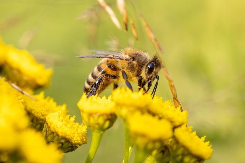 Najbardziej jadowite owady w Polsce! Te owady są...