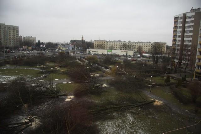 Wycinka na Bronowicach spotkała się z falą protestów, pod topór jednego dnia poszło 77 drzew