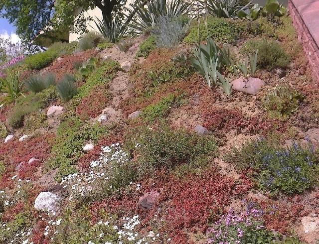 Rośliny okrywoweRoślinami okrywowymi można obsadzać skarpy. Kliknij w zdjęcie i zobacz galerię roślin okrywowych.