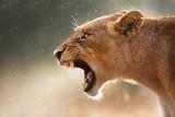 Co Cię może zabić? Najbardziej niebezpieczne zwierzęta świata - gdzie można je spotkać?