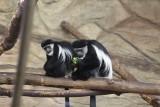Tak kochają zwierzęta w Śląskim Ogrodzie Zoologicznym. Miłość kwitnie. Nie wierzycie? Hipopotamy - Hipolit i Hamba żyły ze sobą ponad 50 lat