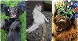 Takich pupili nie ma nikt! Zdjęcia zwierzaków naszych Czytelników bawią do łez!