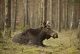 Małgorzata Mickiewicz: Chcemy przywrócić naturze Puszczę Kampinoską
