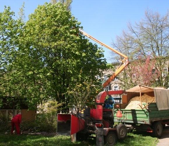 Robotnicy ścinają topole w okresie, gdy ptaki zakładają gniazda. Dlaczego nie zrobiono tego w marcu, gdy było zezwolenie na wycinkę?