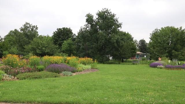 Poznaniacy lubią wypoczywać w ciepłe dni, piknikując na kocu w parkach i mając w okolicy piękne łąki kwietne, tak potrzebne w zabetonowanym mieście. Jednak utrzymanie trawnika nie jest takie proste i wymaga specjalistycznej wiedzy, żeby cieszyć się zieloną trawą. Nie powinno się kosić w upalne dni i podlewać wodą wodociągową.Tak wyglądają tereny zielone w Ogrodzie Botanicznym UAM w Poznaniu.
