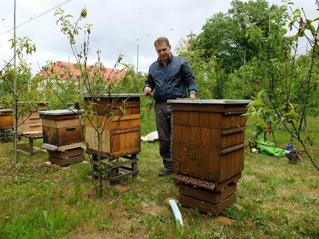 PszczelarzMarcin Szymański skoczył telekomunikację, ale robi to, o czym marzył. Został pszczelarzem.