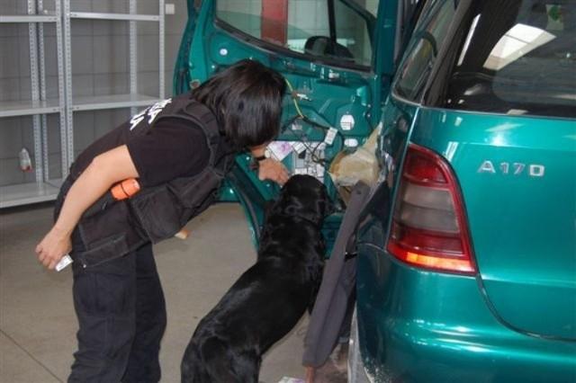 W wykryciu tego przemytu pomogła celnikom służbowa labradorka Sara.
