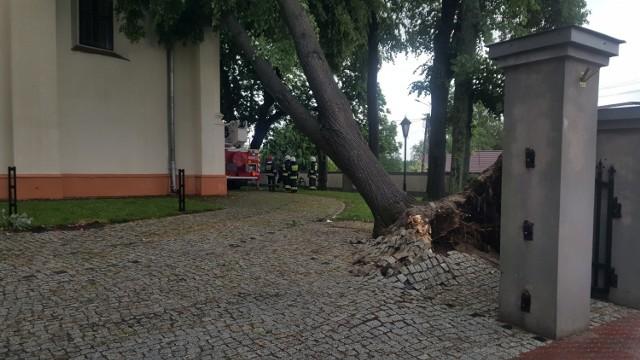 Wichura powaliła drzewa m.in. duże drzewo przy kościele, które niebezpiecznie oparło się o dach