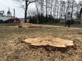 Wnioski o wycinkę ok. 350 drzew w Rzeszowie trafiły do ratusza. Tylko od początku tego roku. To jednak nie wszystko