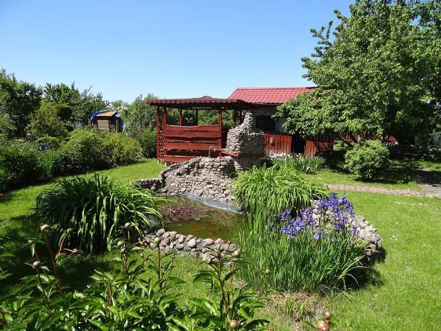 Międzyrzeckie ogrody ,,Wodnik'' - widok jak z ogrodniczego żurnala.