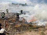 Palą się stogi i zboże na pniu. Strażacy walczyli z ogniem m.in. w Łukowcu [zdjęcia]