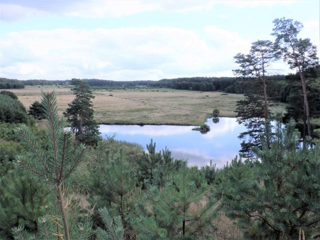 Spojrzenie z wysokiej wydmy na Łąki Studzienieckie i małe jeziorko, które zostało po znacznie większym sprzed wieków, to jeden z najpiękniejszych krajobrazów w naszym regionie, a przy tym mało znany