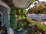 Mieszkańcy Koluszek mogą pochwalić się swoim ogrodem lub balkonem. Marszałek ogłosił konkurs
