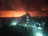 Krzywiec. Pożar kurników w gminie Narew. Spłonęło około 20 tysięcy perliczek [ZDJĘCIA]