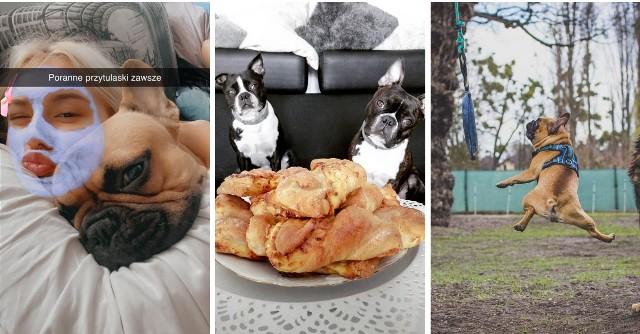 """Z okazji Dnia Psa na facebookowym profilu """"Nowości"""" zaprosiliśmy Was do przesyłania zdjęć swoich pupili. Odzew był natychmiastowy i przeszedł nasze najśmielsze oczekiwania. Otrzymaliśmy ponad 500 komentarzy! W naszej galerii zamieściliśmy najciekawsze i najbardziej zabawne fotografie! Zapraszamy do oglądania!"""