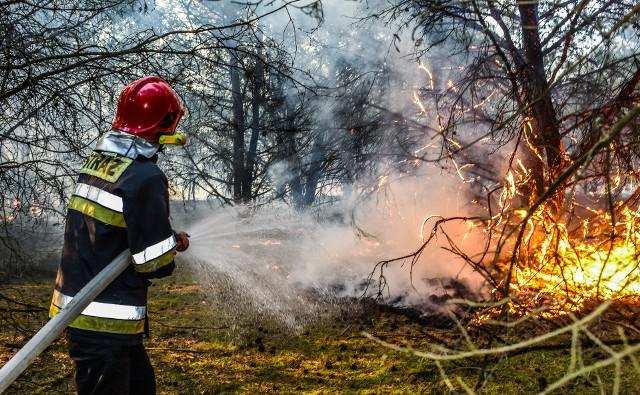 Prawdopodobieństwo wybuchu pożaru w lesie wzrasta dramatycznie, gdy nastają upały. Wystarczy, że ktoś rzuci na ściółkę niedopałek papierosa…