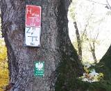 """Pomnik przyrody z informacją o hydrancie. """"To nie tylko uszkodzenie drzewa, ale też jego oszpecenie"""""""