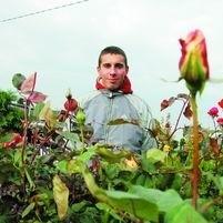 - Jak zawsze w Szepietowie bardzo dobrze sprzedają się róże - mówi Rafał Żebrowski z Osipów Lepertowizny