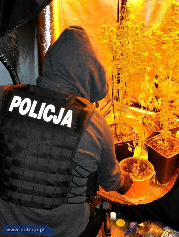 To jednak nie koniec sprawy. W niedzielę 1 lutego br. policyjni śledczy zatrzymali kolejną osobą podejrzewaną o udział w kradzieżach samochodów na terenie województwa wielkopolskiego od marca 2014 r. do stycznia 2015 r. Mężczyzna to 25-letni mieszkaniec powiatu szamotulskiego. Podejrzewany jest o 8 przestępstw polegających na paserstwie. Również trafił do aresztu. Sprawa jest rozwojowa. Policja nie wyklucza kolejnych zarzutów oraz kolejnych zatrzymań. Śledztwo, w ramach którego wyjaśniane są okoliczności oraz szczegóły zdarzeń, prowadzi prokuratura.