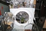 W gminie Dobre uprawiał marihuanę... w pralce automatycznej [zdjęcia]