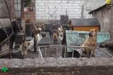Makabryczne miejsce w Starym Czarnowie: zwierzęta zjadały się wzajemnie! [ZDJĘCIA, WIDEO]