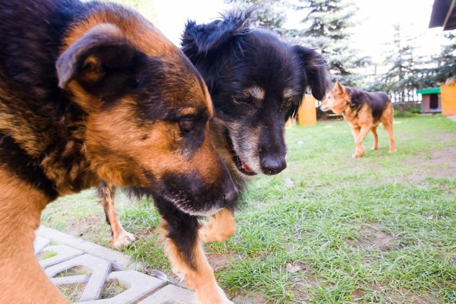Od 10 kwietnia spuszczenie psa ze smyczy w miejscu publicznym karane jest mandatem w wysokości 250 złotych.