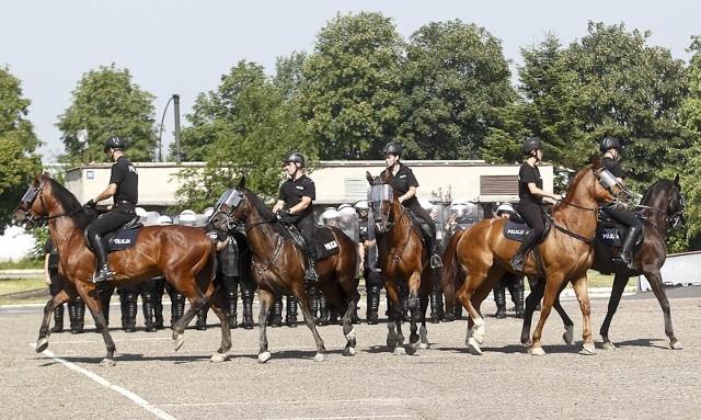 Policyjne konie zdały egzaminPolicyjne konie zdały egzamin.