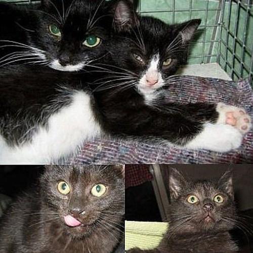 Poszukuję domów dla kotki i trójki jej dzieci