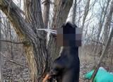 Makabryczne znalezisko na Wrotkowie. Ktoś powiesił psa na drzewie, policja poszukuje sprawcy