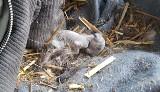 """Pałac Wąsowo: Fundacja zabrała 60 zwierząt. """"Martwe króliki i ptactwo w różnym stanie rozkładu"""". Pałac odpowiada: Nie zaniedbujemy zwierząt"""