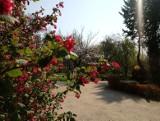 Wiosna w Ogrodzie Botanicznym UKW w Bydgoszczy [zobaczcie zdjęcia]