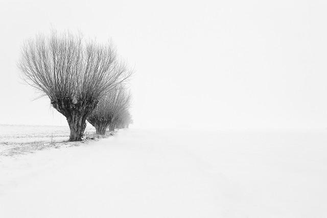 """Oto zwycięska fotografia, która zdobyła tytuł  """"Zdjęcia lutego 2021 r."""" Przedstawia wierzby w miejscowości Kozielec (gmina Dobrcz)"""