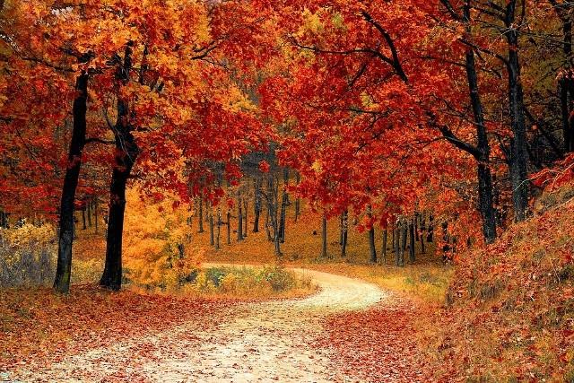 Kiedy rozpoczyna się kalendarzowa jesień?