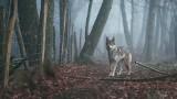 Lubuskie. W tych miejscach w regionie spotkacie wilki. Niektórzy czytelnicy już je widzieli [MAPA]