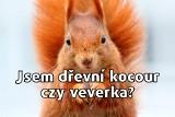 Czeskie memy robią furorę w internecie. Język czeski kopalnią memów. Dlaczego nas bawi? Nie da się go nie lubić