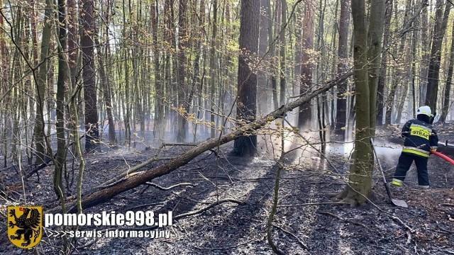 Płonął las we wsi Loryniec w poniedziałek, 10.05.2021 r.! Gasiły go liczne jednostki straży pożarnej. Nikomu nic się nie stało