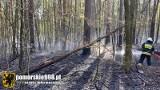 Pożar lasu w Loryńcu! 10.05.2021 r. Gasiły go liczne jednostki straży pożarnej. Spłonęło ok. 1 ha ściółki leśnej